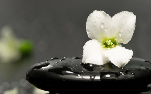 flower_stone_therapy_aroma_11236_2560x1600