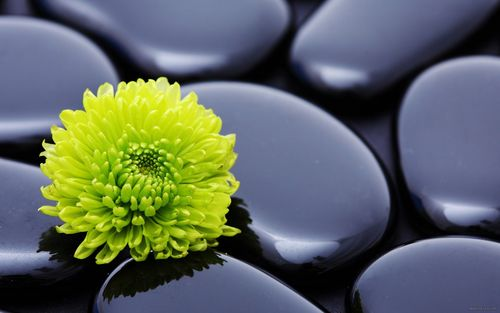 flower_stone_petals_smooth_18292_2560x1600